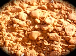 A clsoeup of the crusty red dirt encountered while hiking today.