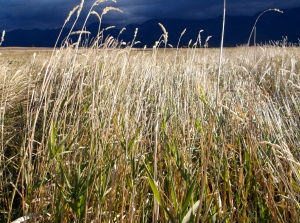 I love how the light comes through the grasses in October