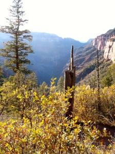 Descending North Kaibab Trail
