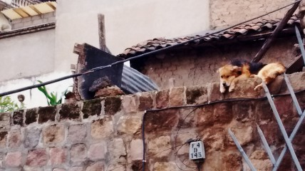 This dog and the doll head (look all the way to the left) are security for a home in the La Ronda neighborhood of Quito